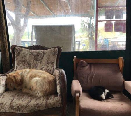 kamp kedi köpek (2)